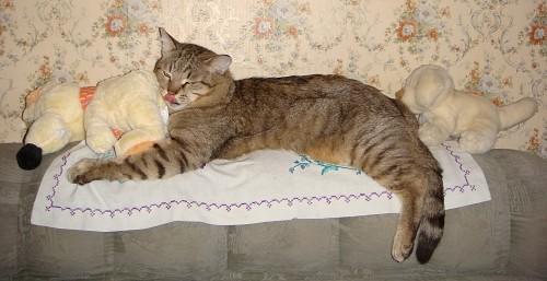Жучка за Кошку, Кошка за Мышку