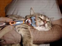 кот бриться отказался