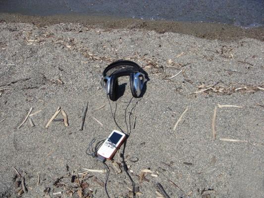 Кактус музыкальный