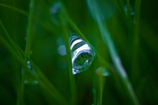 Капля между травинок