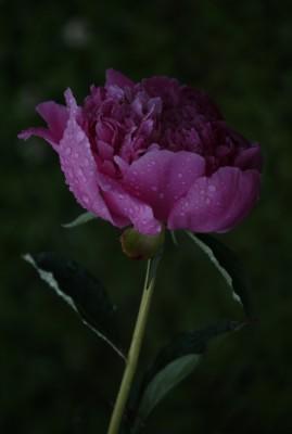 Снимок из GIMP 2.6.5 (плагин UFRAW)