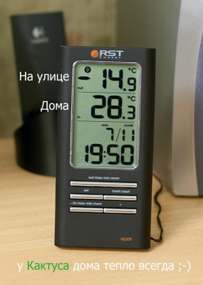 Погода дома у Кактуса