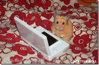 hamsters_4